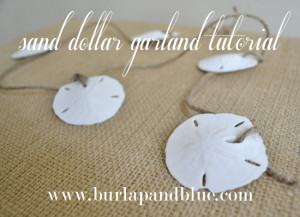 Sand Dollars (use this ebay search to find them inexpensively)