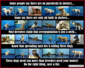 Don't spread lies! Adopt, don't shop!