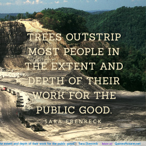 Trees outstrip most people in the extent and depth of their work for ...