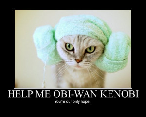 the princess leia hairstyle is worn by all the great princess leia cat ...