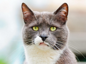 Description: The Wallpaper above is Cat Sad Annoyed Wallpaper in ...