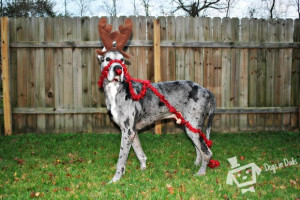 Funny Pictures Great Danes