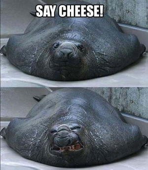 seal tried to give his best smile, funny seal, seal smile