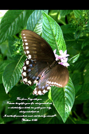 Butterfly With Bible Verse Photograph