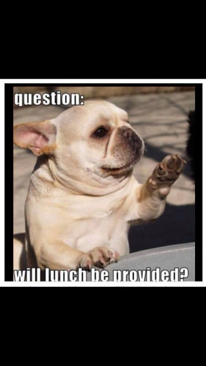 Funny French bulldog Www.arizonasrealty.com