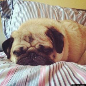 15 Adorable Sleeping Animals To Inspire Your Perfect's Night Sleep