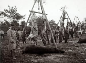 behind a collection of hundreds of glass plates taken during World War ...