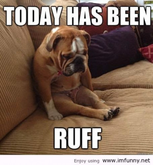 of funny dogs funny dogs with words funny dogs with sayings funny ...