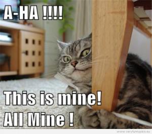 Crazy Looking Cats Crazy looking cat
