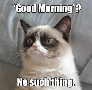 grumpy cat (8)