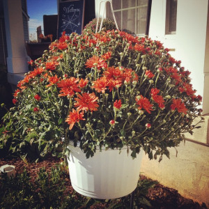 Save on hanging baskets by buying regular flower pots and planting in ...