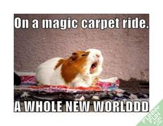 funny hamster magic carpet ride picture more point of view funny ...
