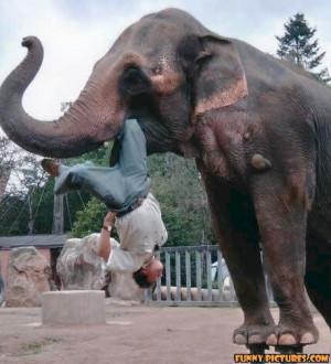 ... gotsmile.net/images/2011/05/02/funny-elephant-attack_130434705442.jpg