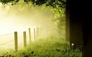 Green Nature in the Morning HD Wallpaper