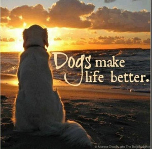 Life with Dogs: Just Better!