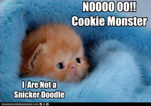 Funny-pictures-kitten-is-not-a-cookie.jpg
