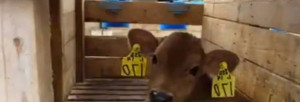 Animal Compassion Tour