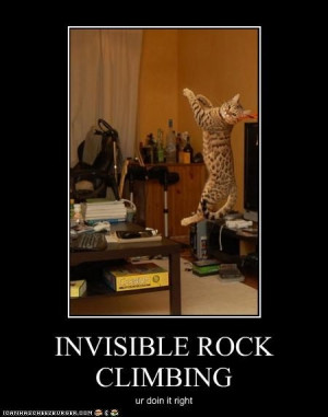 ... , Funny Cat, Fun Stuff, Invisible Rocks, Rocks Climbing, Funny Stuff