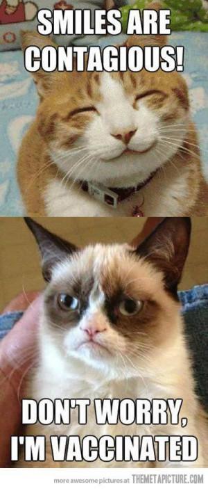 Top 40 most funniest grumpy cat pics #Funny #Quotes