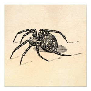 Vintage 1800s Spider Illustration Spiders Template Personalized ...