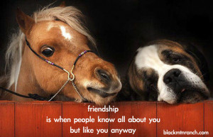 Even our horses like us, faults and all! We are pretty lucky to have ...