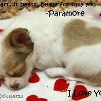 puppy quotes photo: Love Song quote Pup LovePic.jpg
