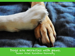 Dog Quotes: Religious Quotes, Dogs and Heaven