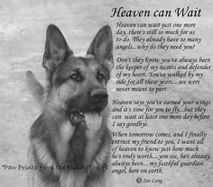 DOG HEAVEN AND PET LOSS