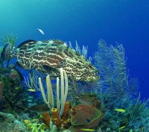 Beautiful Underwater Sea Life