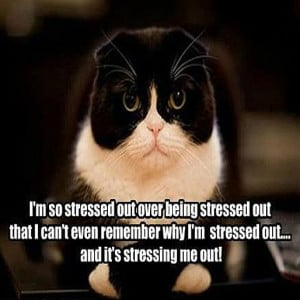 so stressed out over being stressed out that I can't even remember ...
