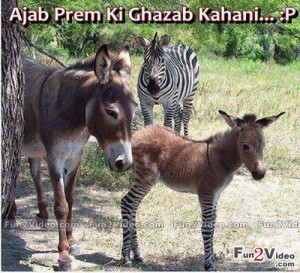Zebra Donkey Funny Love & This Picture Make Smile Laugh