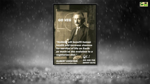 Vegan Vegetarian Albert Einstein Quote Quotes 1920x1080 hdw.eweb4.com