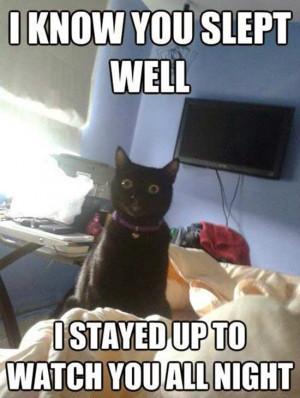 What do you call a feline that lives in an igloo? An eskimew!