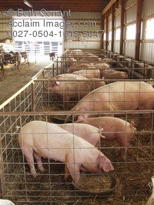... , stock photography, clipart images and stock photos of pig pens
