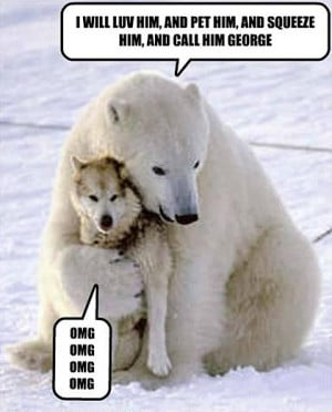 Funny photos funny Polar bear hugging wolf