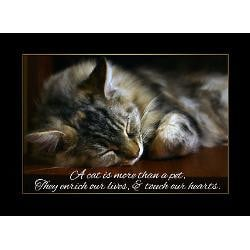 pet_cat_sympathy_card_loss_of_pet_pk_of_10.jpg?height=250&width=250 ...