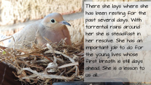 Life Lesson Learned From A Dove