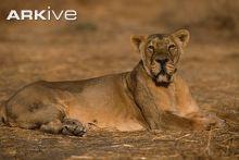 female lion quotes