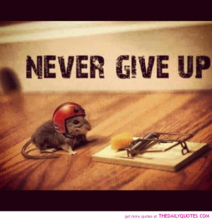 funny-cute-pictures-never-give-up-quote-motivational-quotes-pics