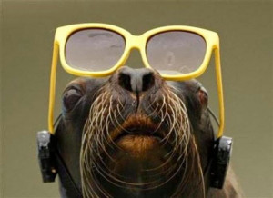 Funny Photos of Animals Wearing Glasses [15 pics]