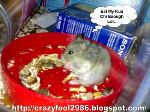 This is Chi Chi, the male. Eating Kua Chi. Hamster life seems to be ...