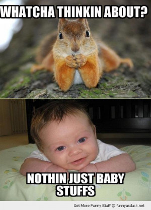 thinking about squirrel dunno baby stuff animal cute funny pics ...