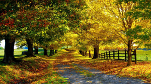 Autumn season wallpaper 5260