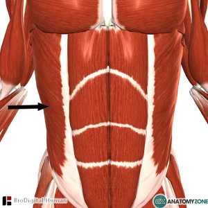 external abdominal oblique muscle pain