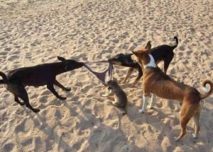 Funny Animals Cats & Dog Fighting