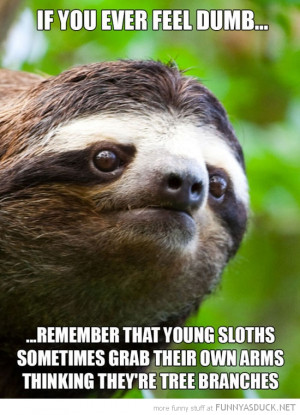 Funny Sloth Captions Funny+sloth+pictures+(16)