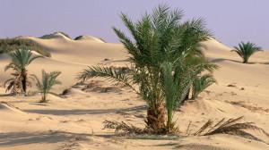 oasis dakhia, desierto del sahara, egipto wallpaper