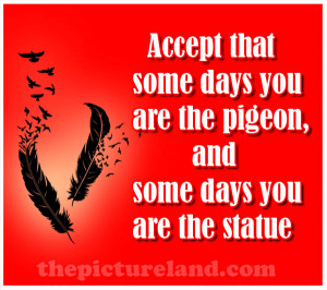 Pigeon Picture With Sayings About Someday In Life