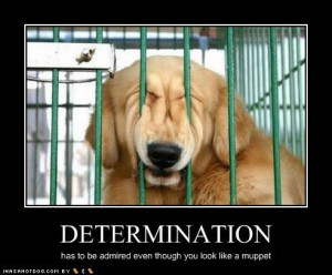 quotes of the day archived funny dog pictures determination muppet