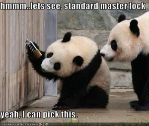 grappige plaatjes panda afbeeldingen, grappige plaatjes panda foto's ...